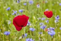 有野花的花草甸 库存图片