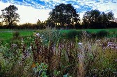 有野花的草甸在春天 库存图片