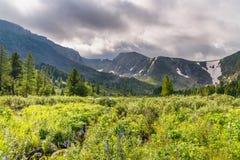有野花的草甸在阿尔泰共和国临近Karakol湖第四个湖  俄国 免版税图库摄影