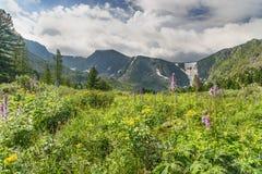 有野花的草甸在阿尔泰共和国临近Karakol湖第四个湖  俄国 库存照片