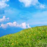 有野花的草甸 免版税库存照片