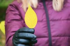 有金发的一个女孩在一件淡紫色夹克在她的手上拿着一片黄色秋天叶子 免版税库存图片