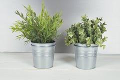 有金属罐的两棵植物在木桌上 库存图片