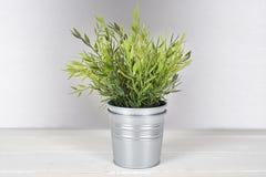 有金属罐的植物 库存照片