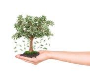 有金钱树的手 图库摄影