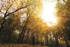 有金黄树的秋天公园 免版税库存图片