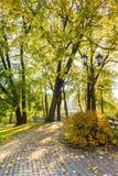 有金黄树的秋天公园 库存图片