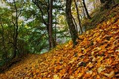 有金黄叶子的美丽的秋天森林在地面上 库存图片
