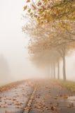 有金黄树的秋天街道 免版税库存图片