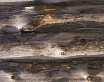 有钉子的老木板 免版税库存照片