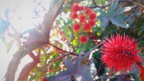 有钉的奇怪的红色植物 库存图片