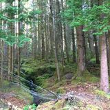 有铁丝网的杉木森林 库存照片