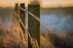 有铁丝网篱芭的早期的春天草甸在日落 免版税图库摄影