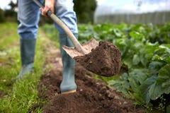有铁锹开掘的庭院床或农场的人 图库摄影