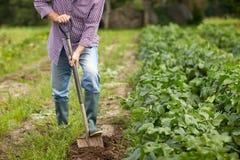 有铁锹开掘的庭院床或农场的老人 免版税库存照片