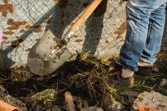 有铁锹的人,开掘土壤 免版税库存图片