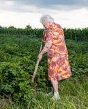 有铁锹的老妇人 库存图片
