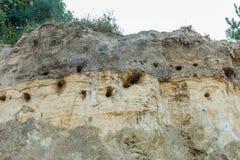 有银行燕子巢的陡峭的沙子墙壁,里帕里亚里帕里亚 免版税库存照片