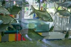 有银鱼的水族馆 免版税库存图片