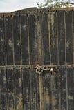 有链子和挂锁背景的被风化的金属门 免版税库存图片