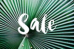 有销售文本的顶视图热带森林迷离和旅行adven 免版税图库摄影