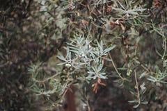 有锋利的叶子特写镜头的绿色植物 免版税库存照片