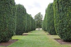 有锥体修剪的花园赤柏松植物的正式环境美化的庭院 免版税库存图片