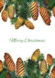 有锥体的圣诞节云杉的在白色的枝杈和文本 免版税库存照片
