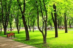 有长凳和大绿色树的城市公园 图库摄影