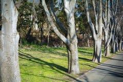 有长凳和胡同的美丽的绿色公园 免版税图库摄影