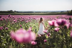有长发的可爱的女孩在白色礼服偏僻走在淡紫色鸦片花田 图库摄影