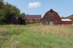 有长大它的红色藤的老土气被风化的谷仓 图库摄影
