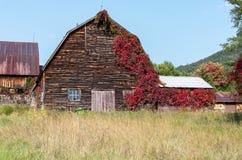 有长大它的红色藤的老土气被风化的谷仓 库存图片