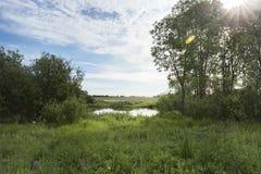有长得太大的绿色银行和云彩的一个美丽如画的池塘在蓝天 免版税库存图片