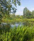 有长得太大的绿色银行的一个美丽如画的池塘在城市公园 图库摄影