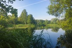 有长得太大的绿色银行的一个美丽如画的池塘在城市公园 库存图片