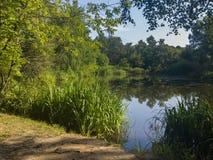 有长得太大的绿色银行的一个美丽如画的池塘在城市公园 库存照片