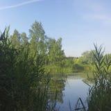 有长得太大的绿色银行的一个美丽如画的池塘在城市公园 免版税图库摄影
