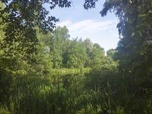 有长得太大的绿色银行的一个美丽如画的池塘在城市公园 免版税库存图片