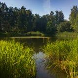 有长得太大的绿色银行的一个美丽如画的池塘在城市公园 免版税库存照片