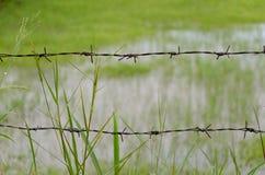 有长得太大的草的生锈的铁丝网篱芭 免版税库存照片