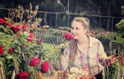 有长的卷发的少妇嗅到室外玫瑰的花 免版税库存照片