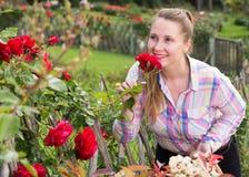 有长的卷发的少妇嗅到室外玫瑰的花 库存照片