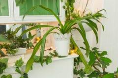有长的叶子的绿色植物在白色内部 免版税库存照片