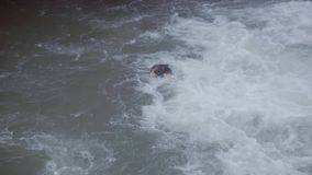 有长的头发的活跃有胡子的人在河游泳在瀑布下 股票录像