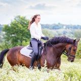 有长的头发骑乘马的女孩在领域 免版税库存照片