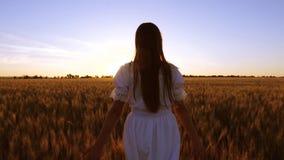 有长的开发的头发的愉快的女孩走领域用金黄麦子并且抚摸她的手在日落 慢的行动 影视素材