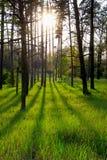 有长的阴影的森林从落日 库存图片