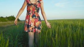 有长的leggs的美丽,可爱的欧洲女孩在与花的短裙在黑麦领域走并且抚摸黑麦钉  股票录像