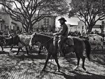 有长角牛牛的牛仔在沃斯堡牲畜饲养场 免版税图库摄影